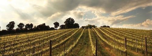 Winestories - Vigneto