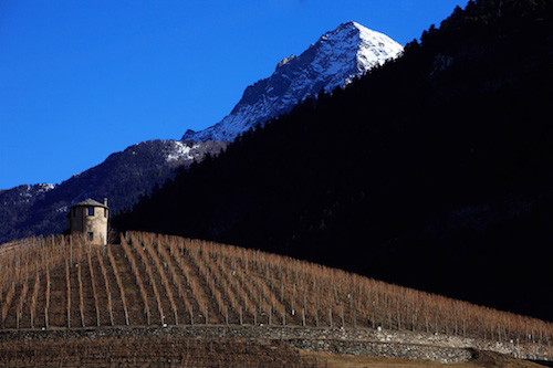 Winestories - Vigneto con montagne