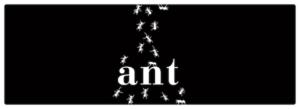 Ant 2012 Brut - Sparkle 2018