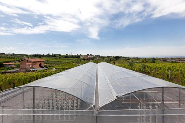 #LazioPrezioso – L'agricoltura 2.0 di The Circle Food&Energy Solution