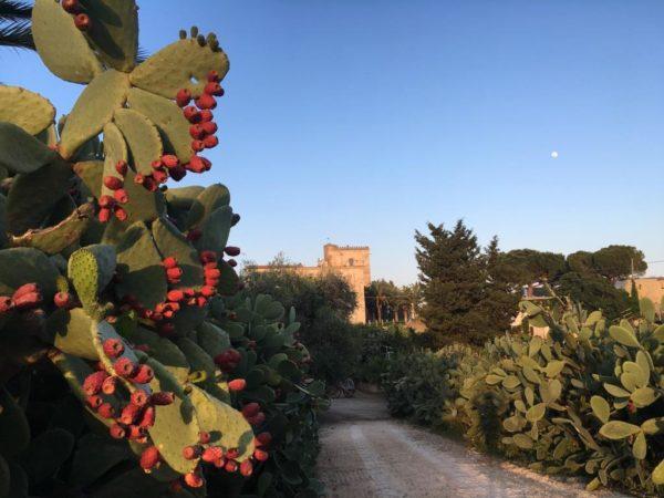 Dimore con Gusto – Borgo Valle Rita, il country resort tra Basilicata e Puglia