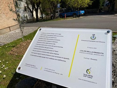 """Associazione Strada dell'Olio Extravergine di Oliva DOP """"Umbria"""""""